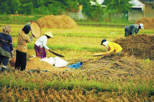 informasi pertanian indonesia
