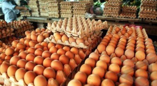 harga telur hari ini